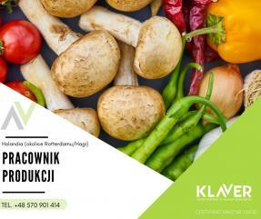 Sortowania warzyw i owoców, praca w Holandii